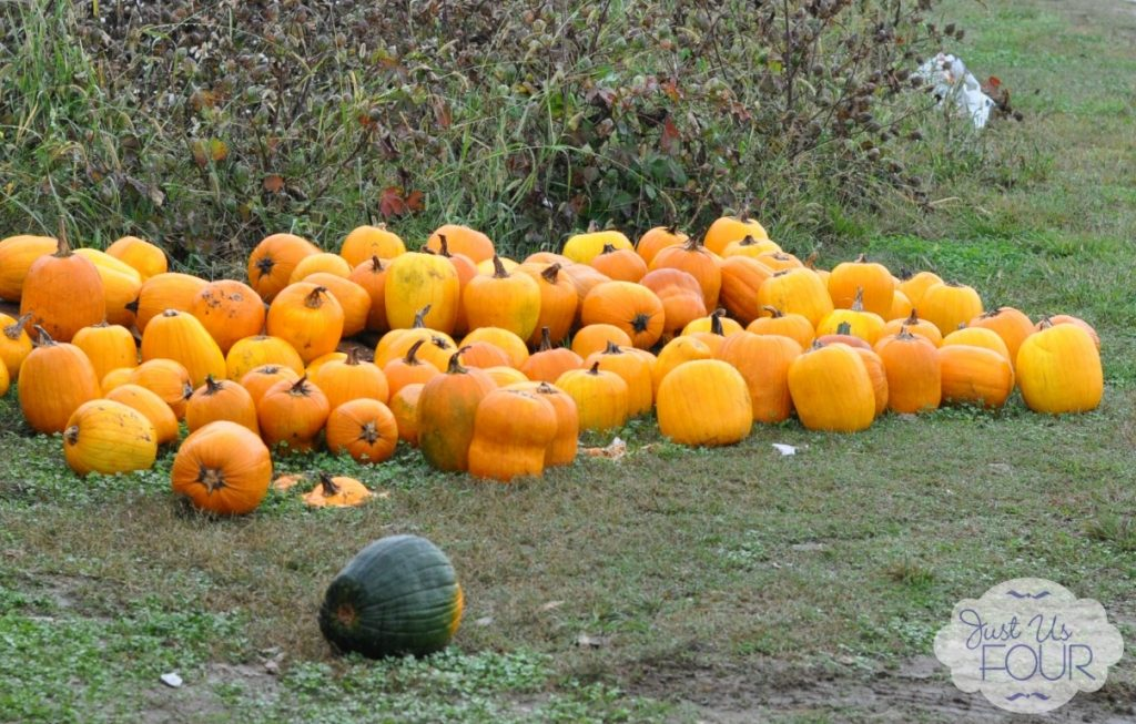 Pumpkin Patch_wm