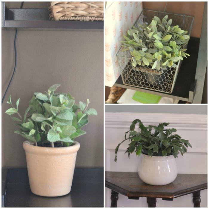 sparkle-plant-collage