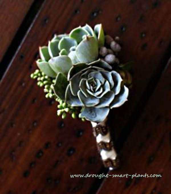 13 - Drought Smart Plants - Succulent Wedding Bouquet