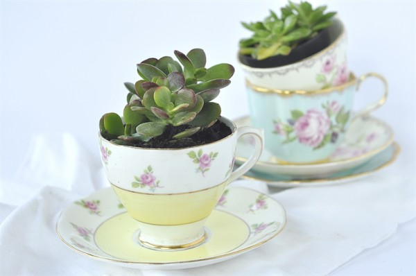 15 - Your Home Based Mom - Tea Cup Succulent