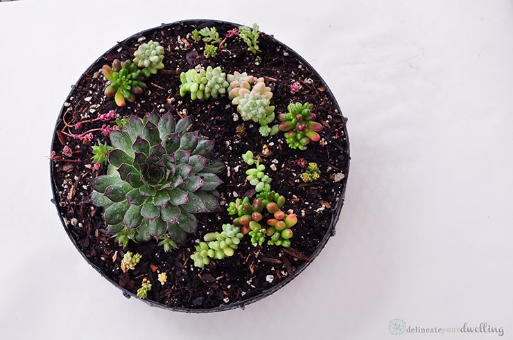 19 - Delineate Your Dwelling - Succulent Table
