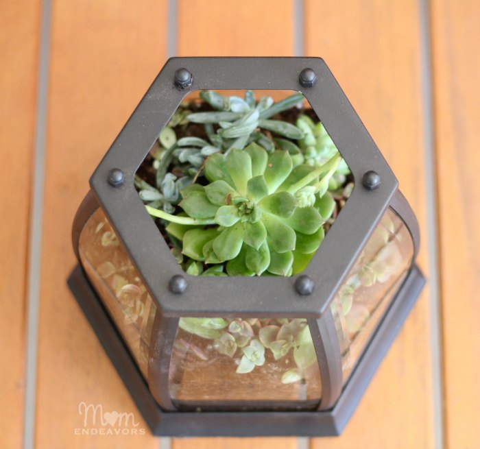 25 - Mom Endeavors - Patio Tabletop Succulent Garden