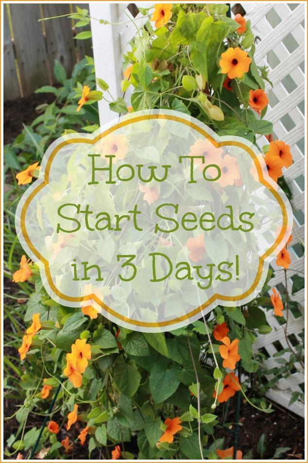 01 - Mom 4 Real - How to Start Seeds in 3 Days