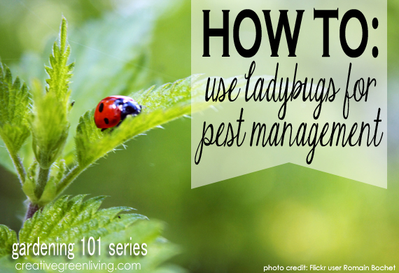 08 - Creative Green Living - Using Ladybugs for Pest Management