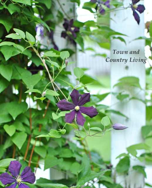 09 - Town N Country Living - Tips for Flower Gardening