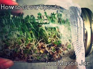 14 - Condo Blues - Grow Sprouts in Mason Jar