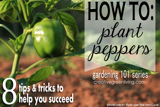 17 - Creative Green Living - How to Plant Peppers