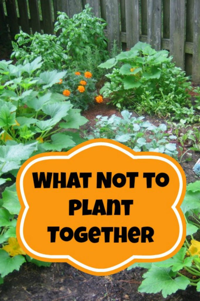 23 - Moms Need to Know - Companion Planting Tips